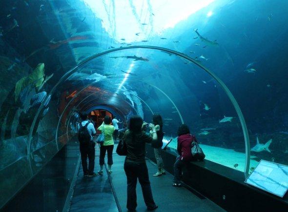 sea life London acquarium