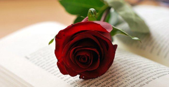Vive La Rose7